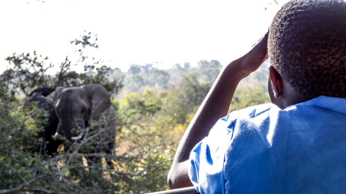 looking at elephant.jpg