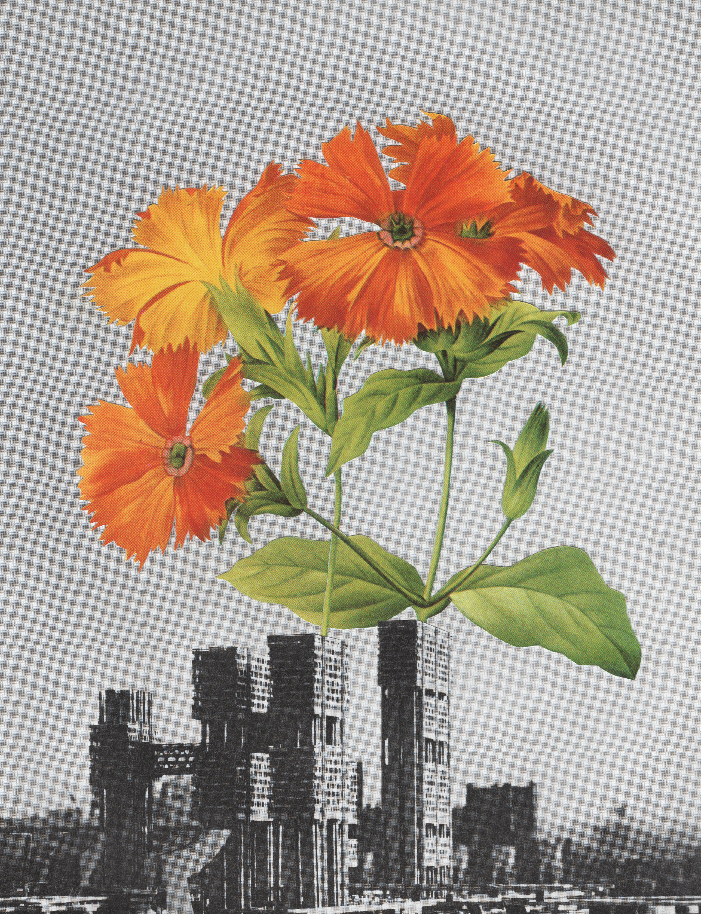 In love with this luscious collage from Garrett Blad, proof that bright orange beauty can bloom even in the heart of a capitalist cityscape.
