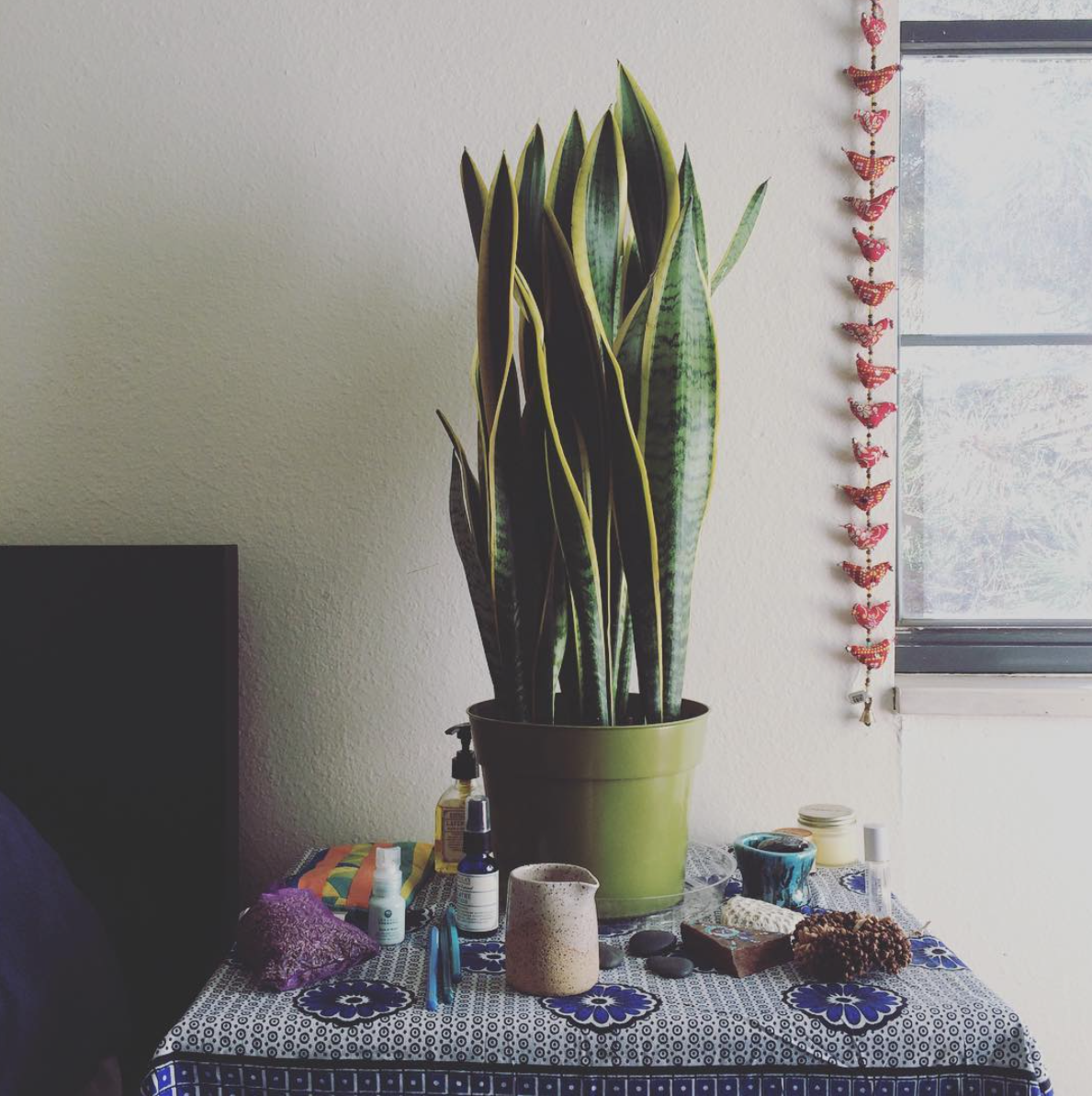 Snake plants might not shed their skin but they share the same wild, new world-building spirit as snakes.