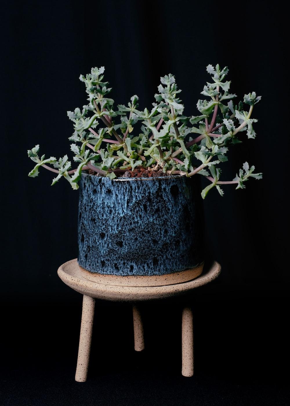 Tula Plants & Design 1.jpg