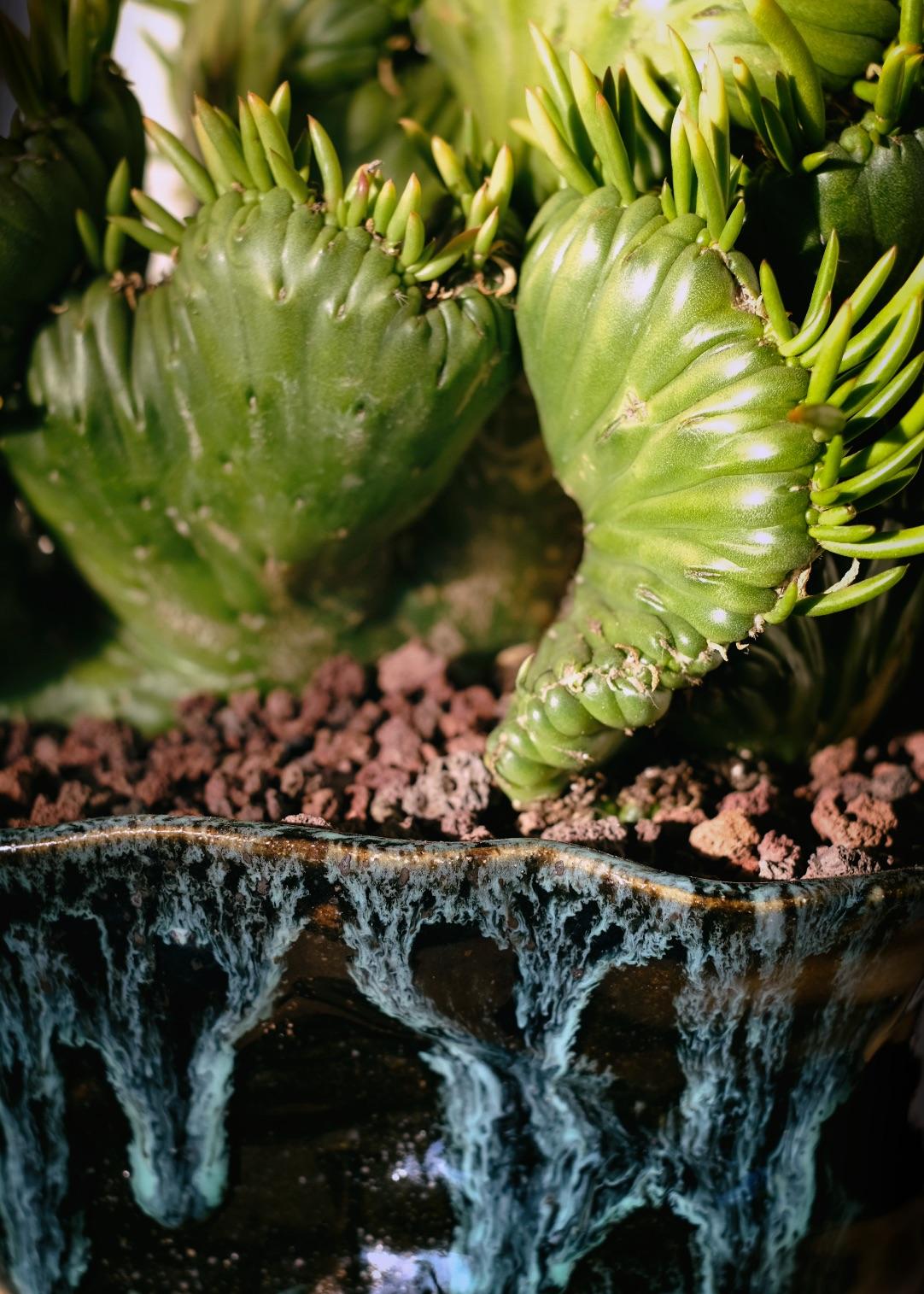Tula Plants & Design copy.jpg