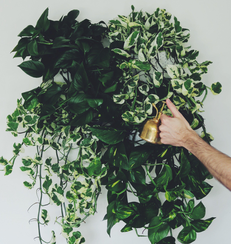 Botanical BB copy.JPG