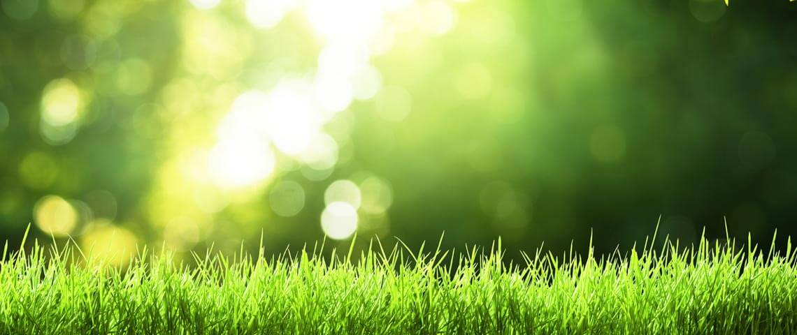 cool-season-lawn-header.jpg