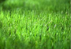 grass-fertilizers-for-golf-course.jpg