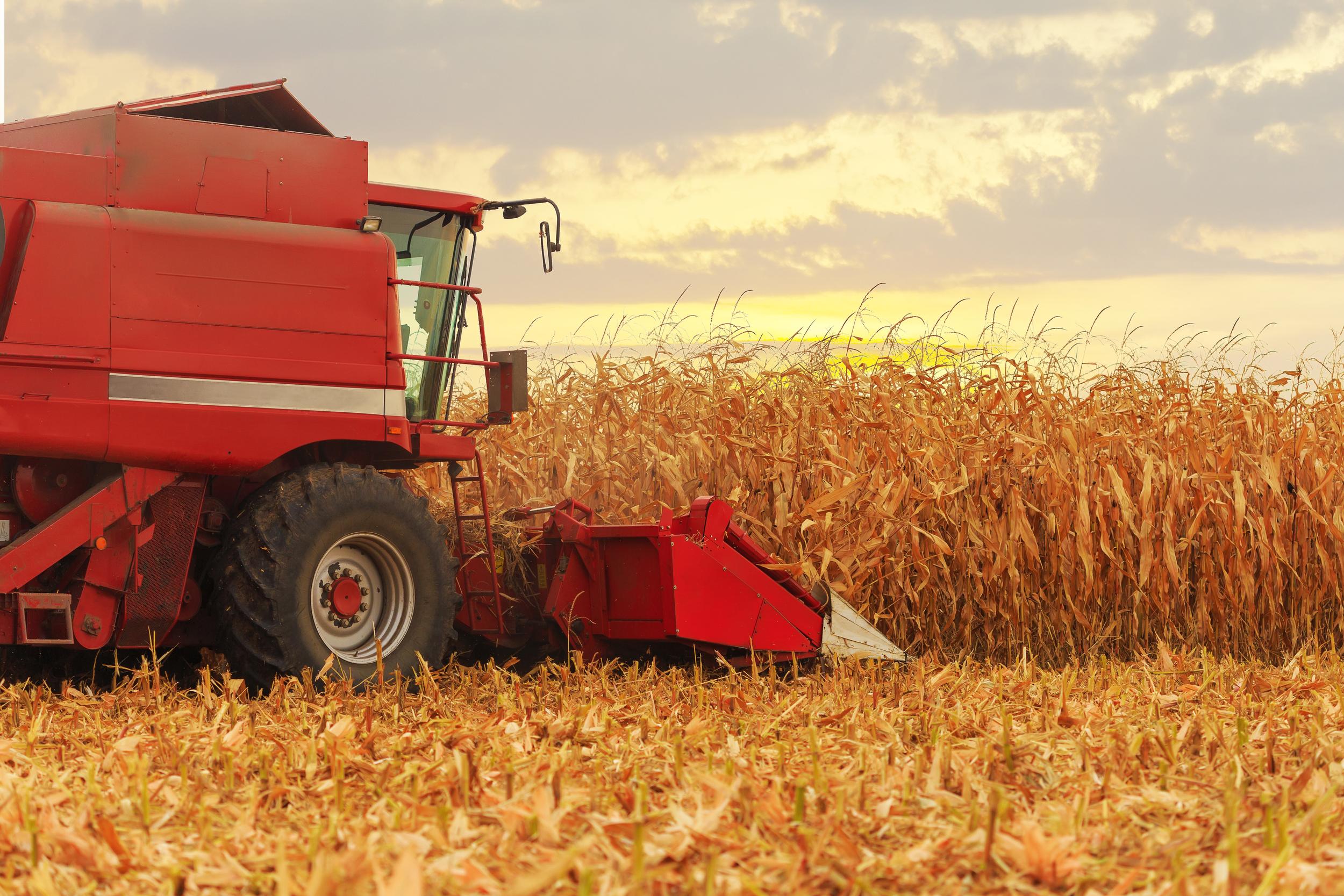 iowa-corn-farming