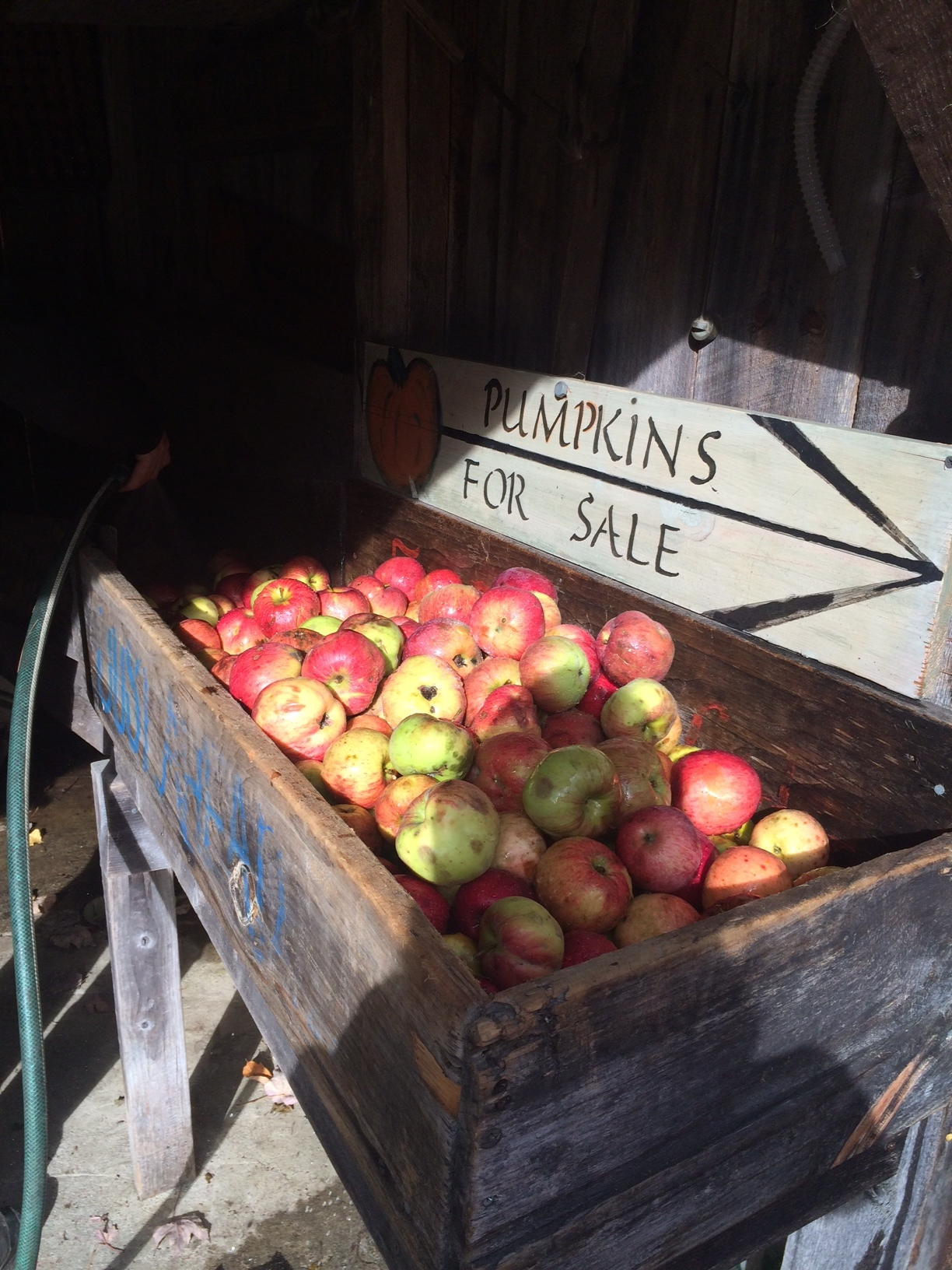The beginning of the press where apples are sorted and washed.