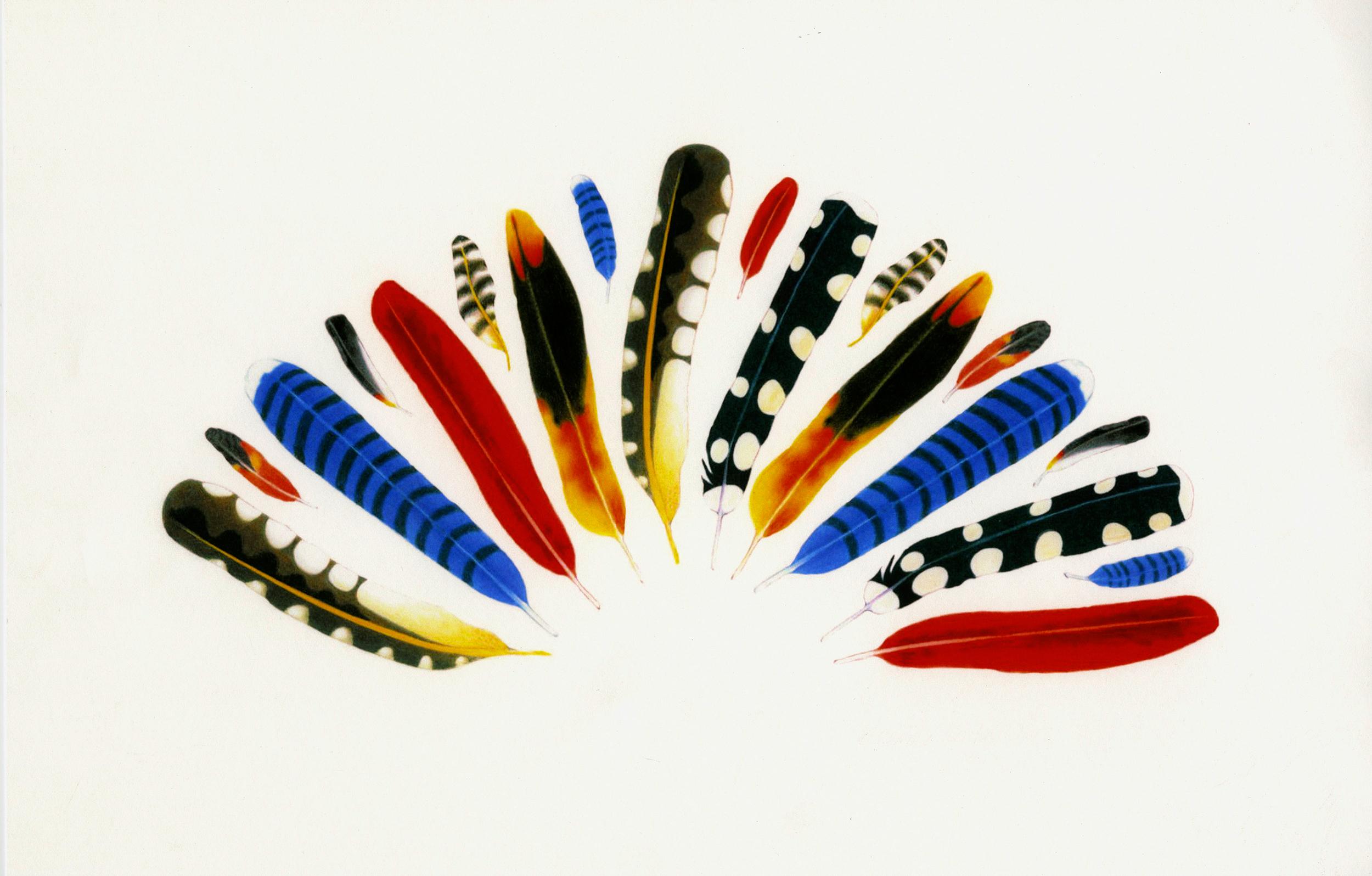 Skoorka Fan Feathers copy.jpg