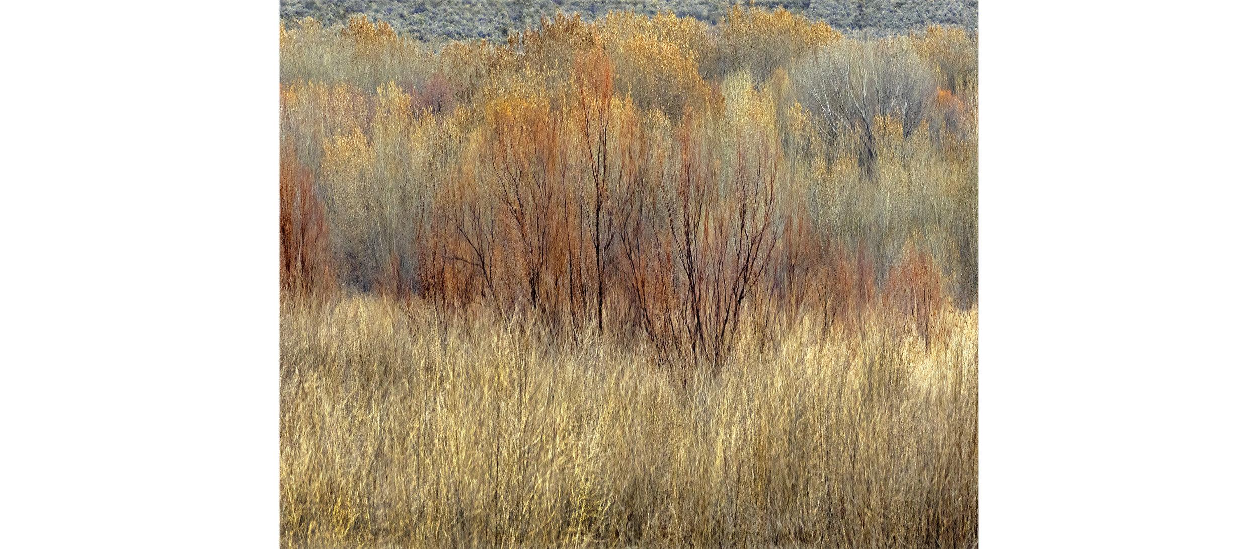 John Isaac_Landscape 1_28x22-$1500.jpg