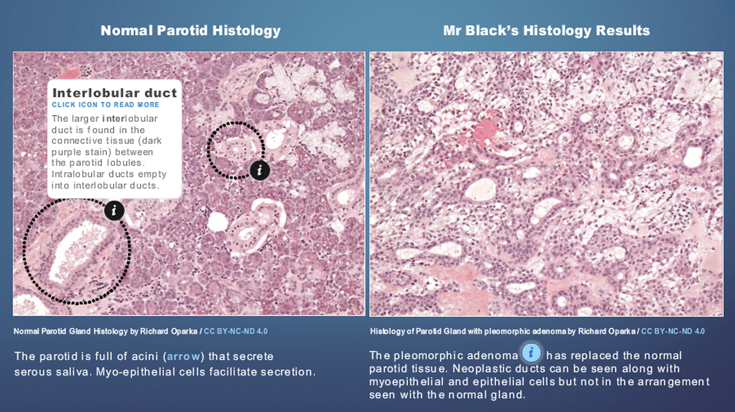 Medical_Interactive_Histology_Resources_v02.jpg