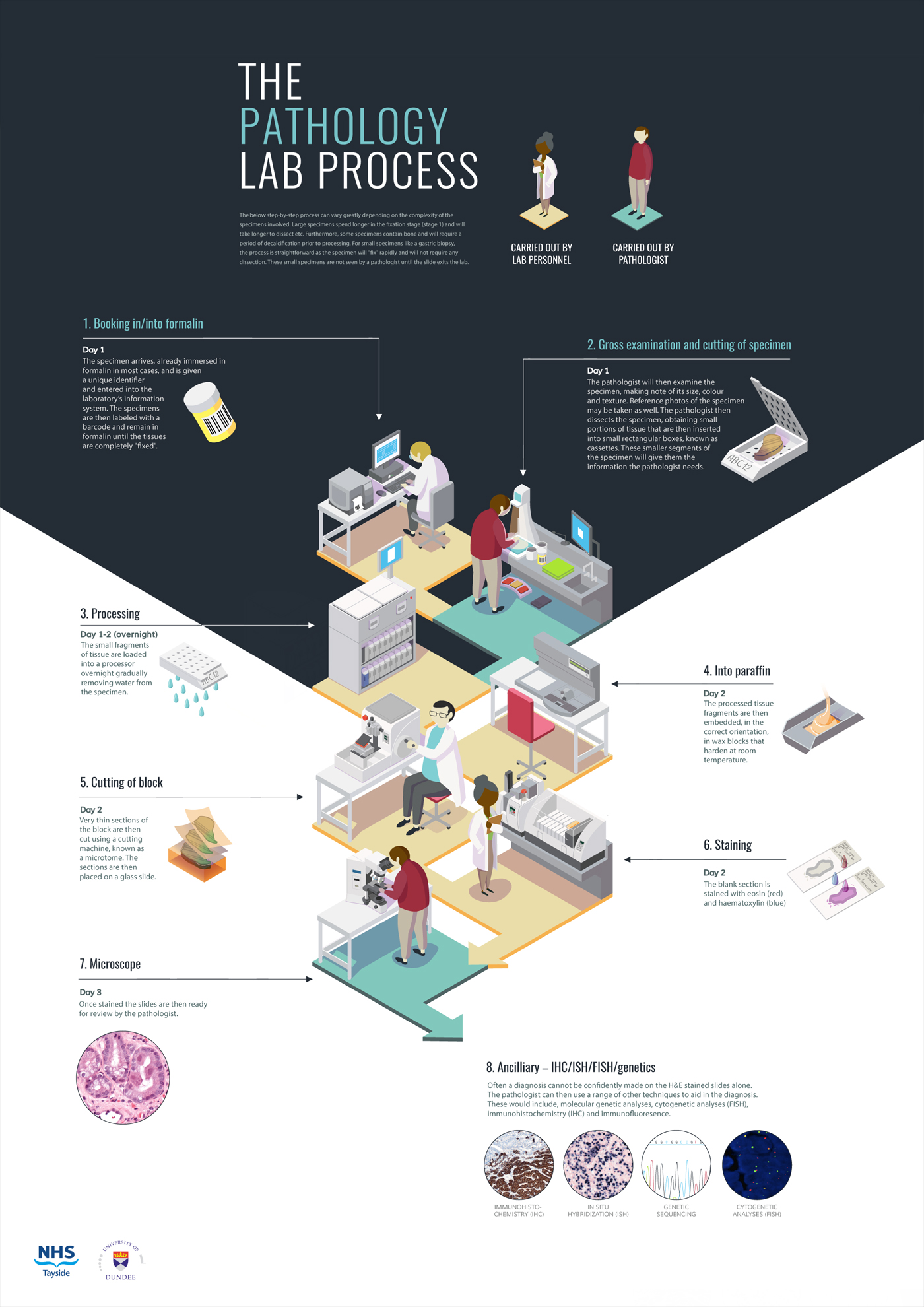 Annie_Campbell_Infographic_Poster_Pathology_Lab_Process.jpg
