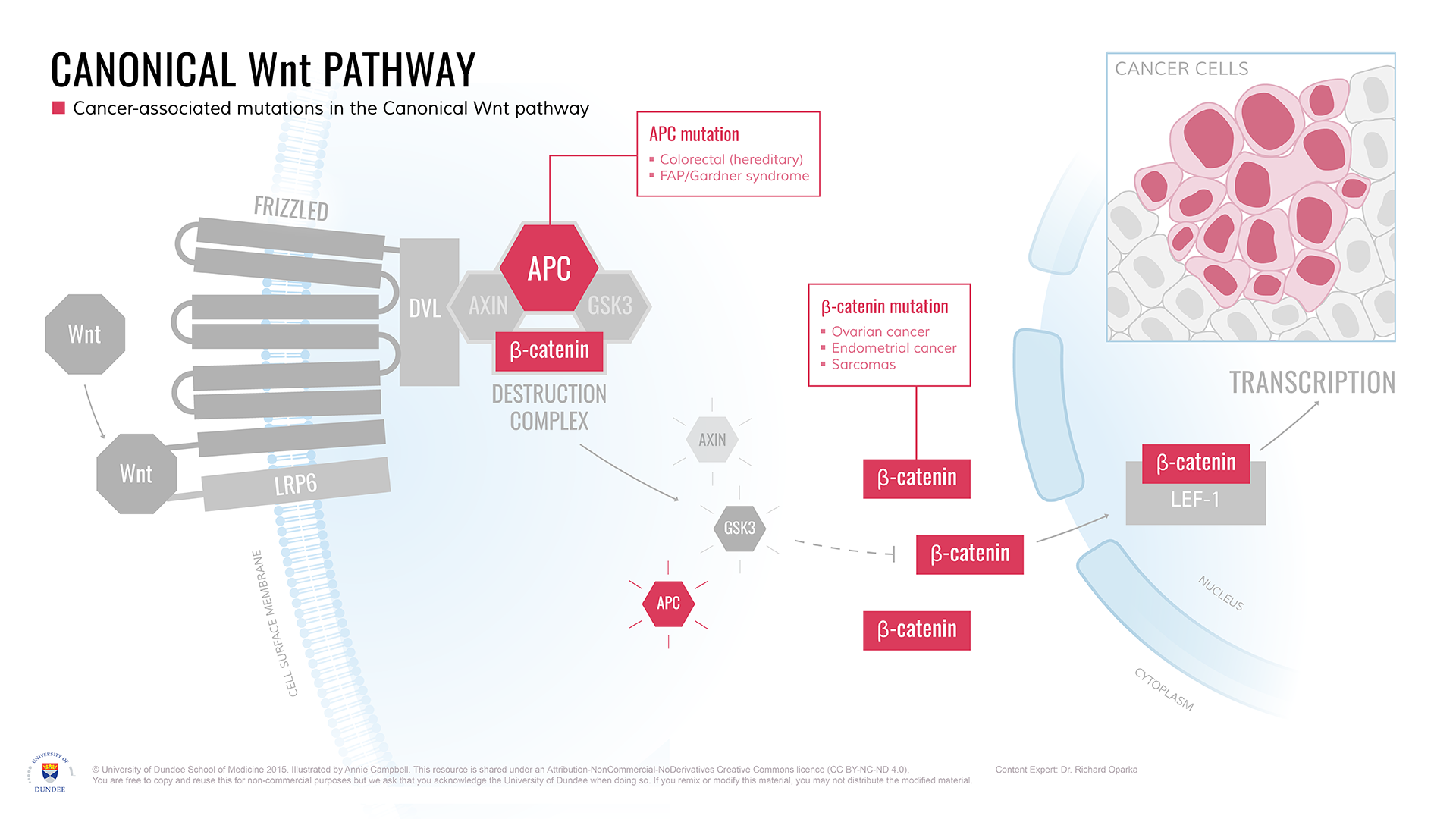 Canonical_Wnt_pathway_Cancer_Targets.png