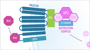 MEDICAL DIAGRAMS - CELLULAR PATHWAYS IN CANCER   Read More