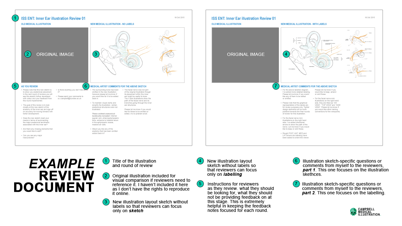 Example_Review_Documents_Medical_Illustration.png