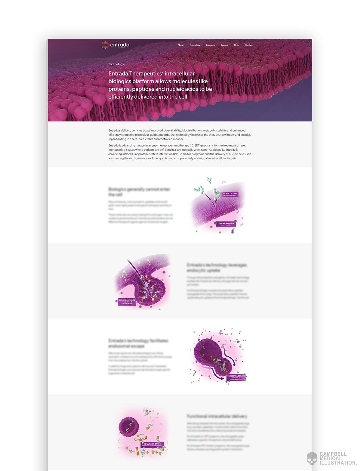 Entrada-Technology-page-design-showcase-medical-illustration.png