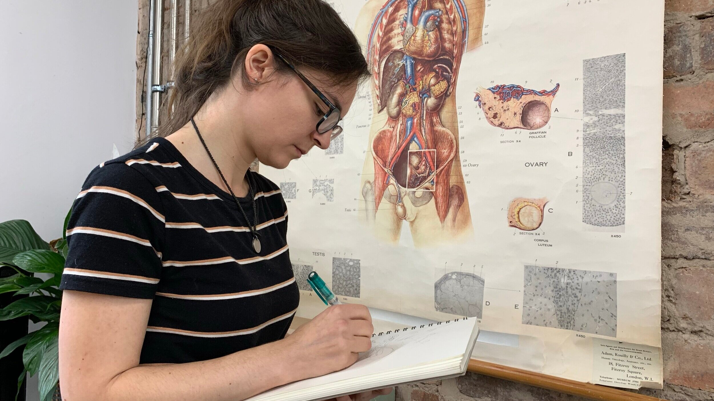 Susie went to the Anatomy Museum at the University of Glasgow to learn more and sketch infant anatomy for organ placement research