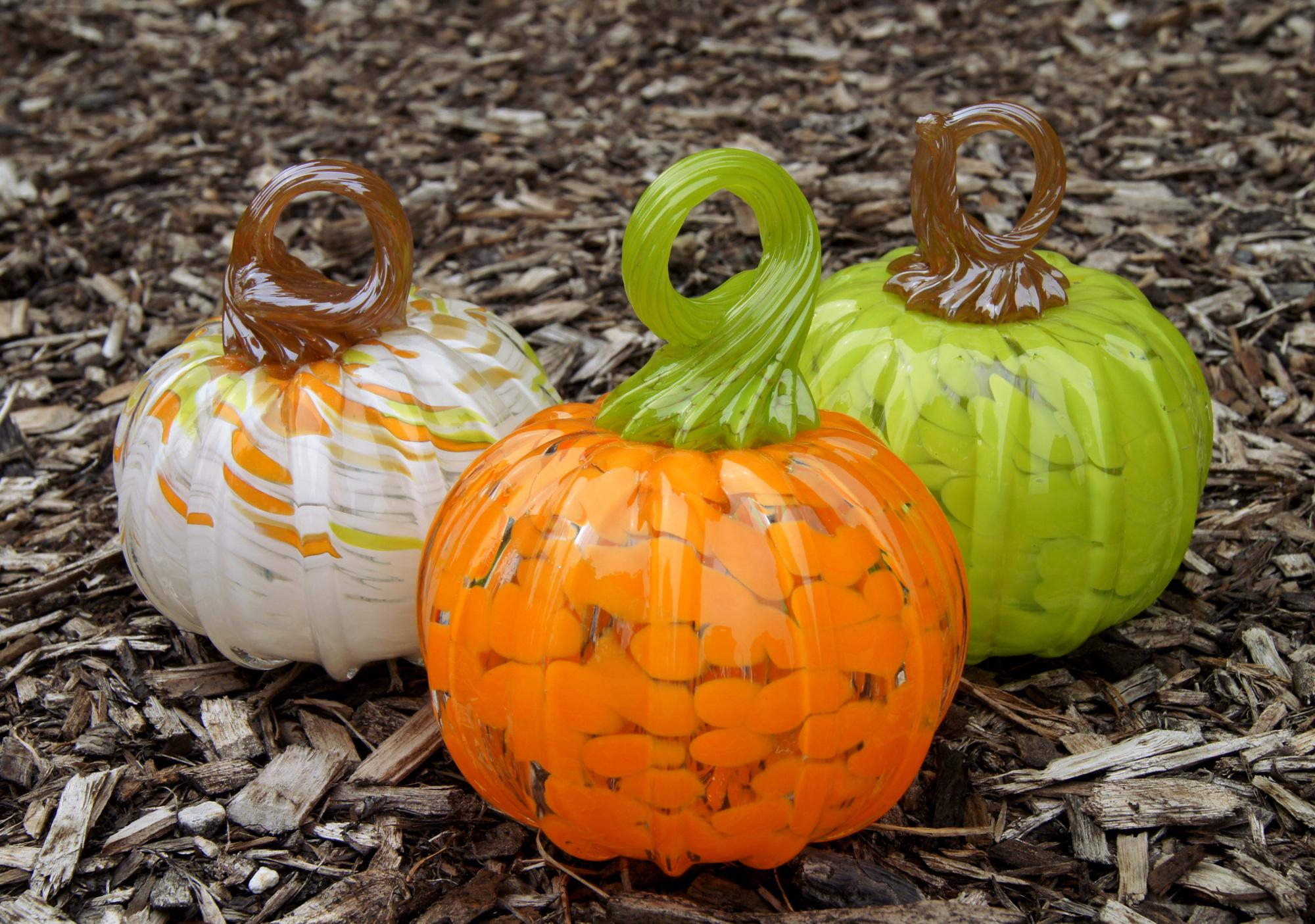 pumpkin group w white.JPG