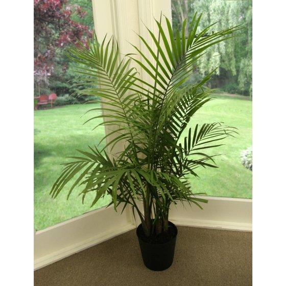 palm indoors.jpeg