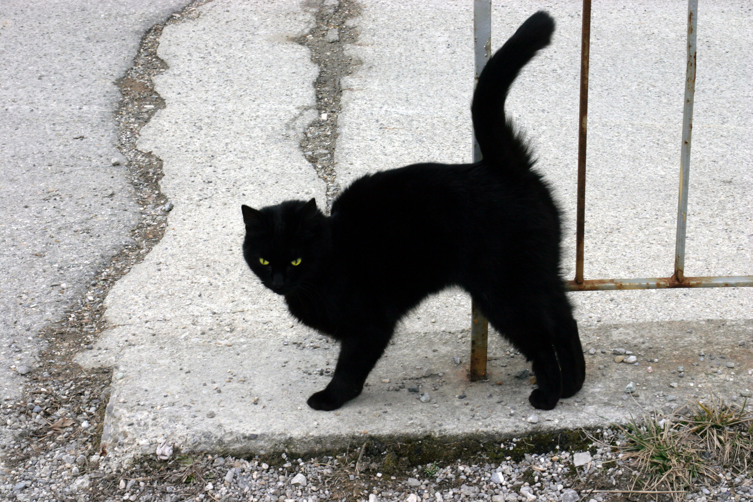 """It's actually a fact that black cats get adopted less frequently than any other colour because they're """"unlucky"""". This makes me too sad to make the joke I had lined up."""