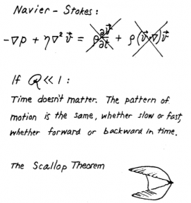 Diagram's from Purcell's original lectures on his now infamous theorem.