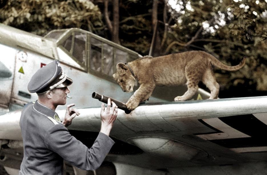 Franz Von Werra and Simba inspecting his Bf 109 E-4. They're checking out the MG FF/M cannon in the wing. I believe this was taken in August of 1940. (That's just an educated guess, however)