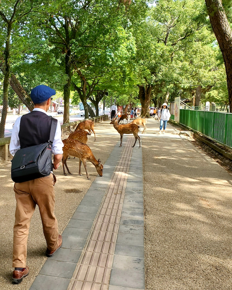 Richard walking into a gang of deer on the streets of Nara.