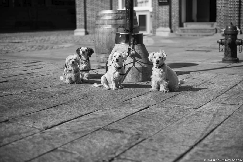 Doggies #17