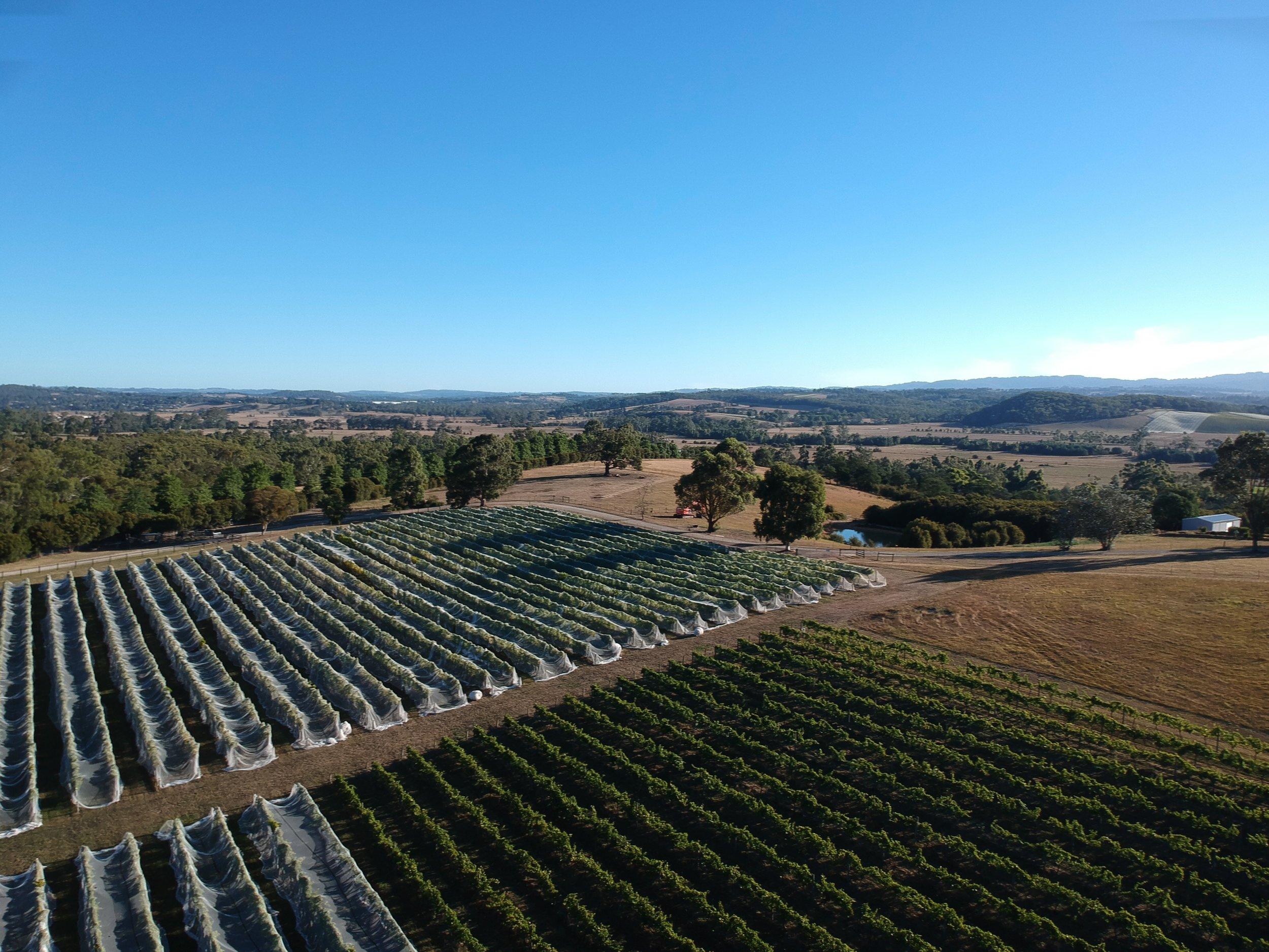 Aerial Vineyard.jpeg