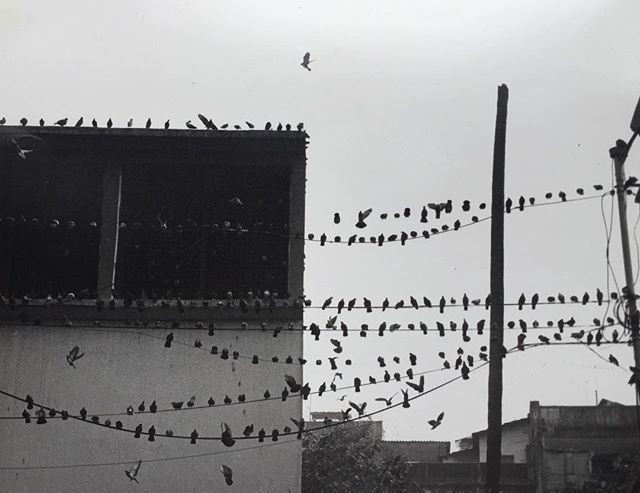 Form my old, old, dark room days.  One of my favourites!  Printed on @ilfordphoto  #blackandwhite #calcutta #wires #pigeons