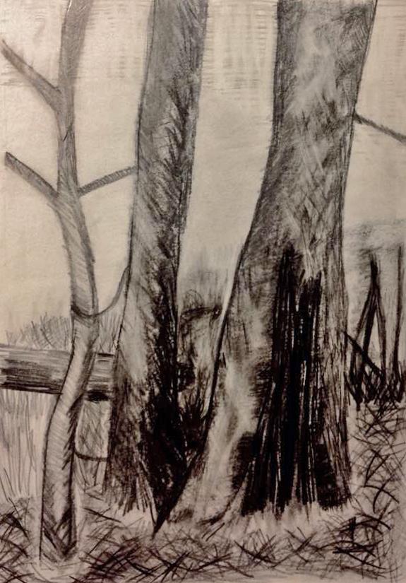 Burnt trees .jpg