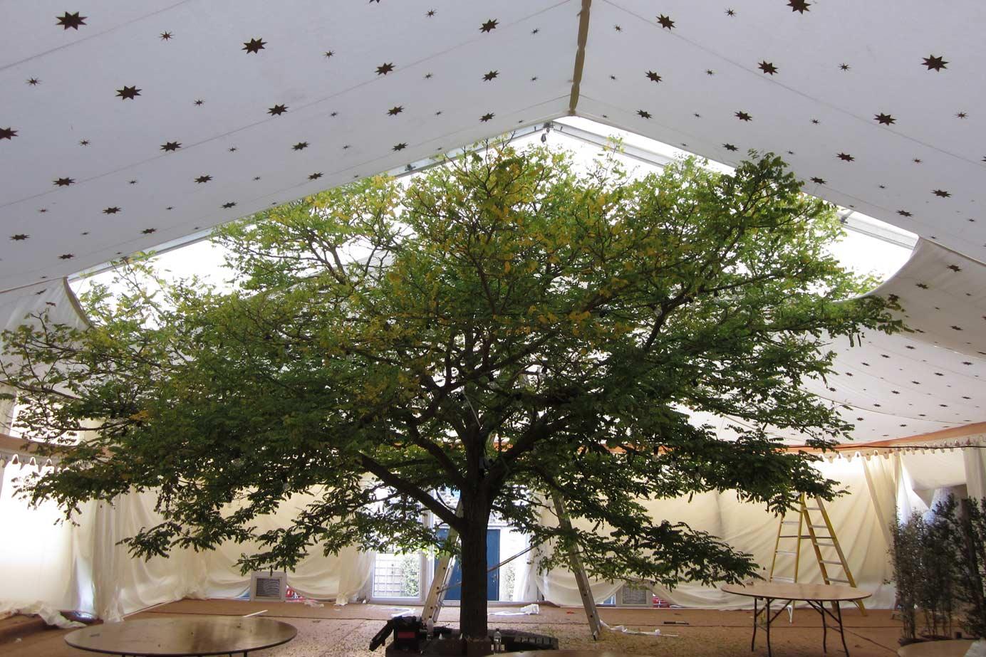 Ceiling Design -   Tree Centre Piece
