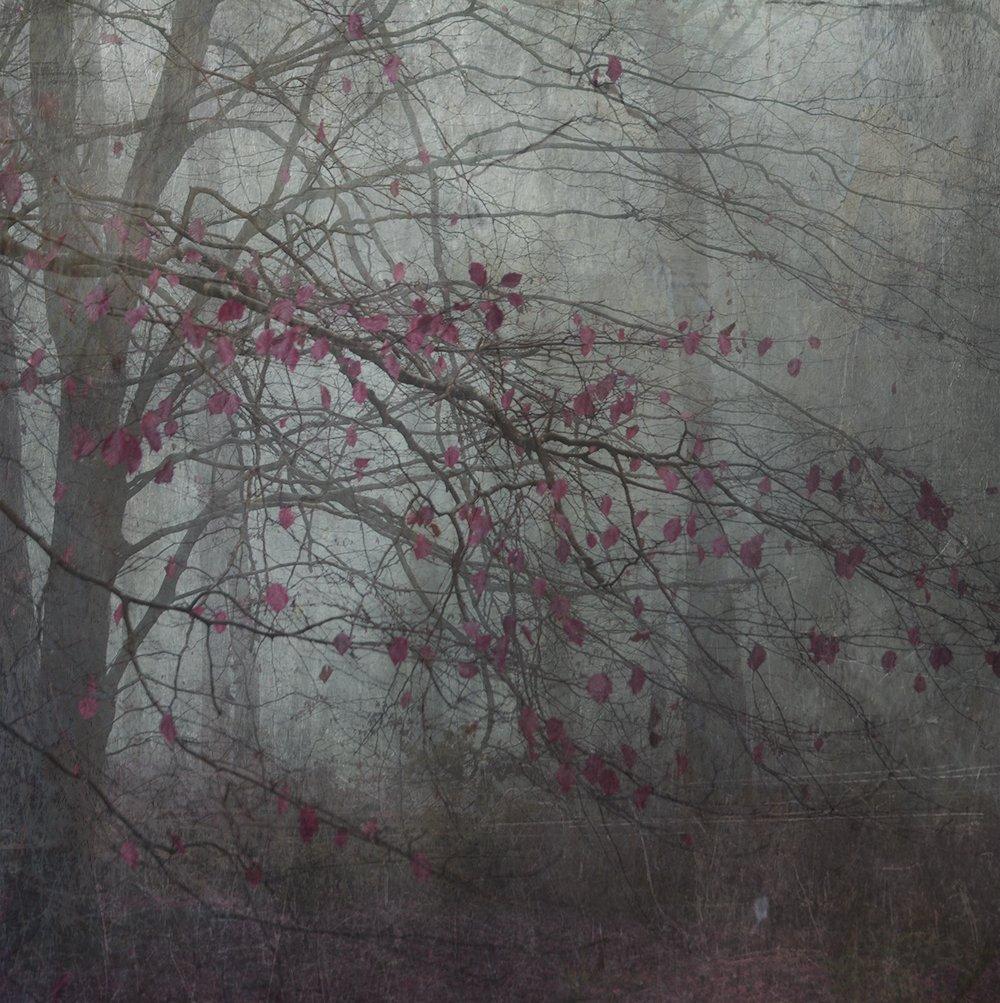 Untitled - Jo Stephen