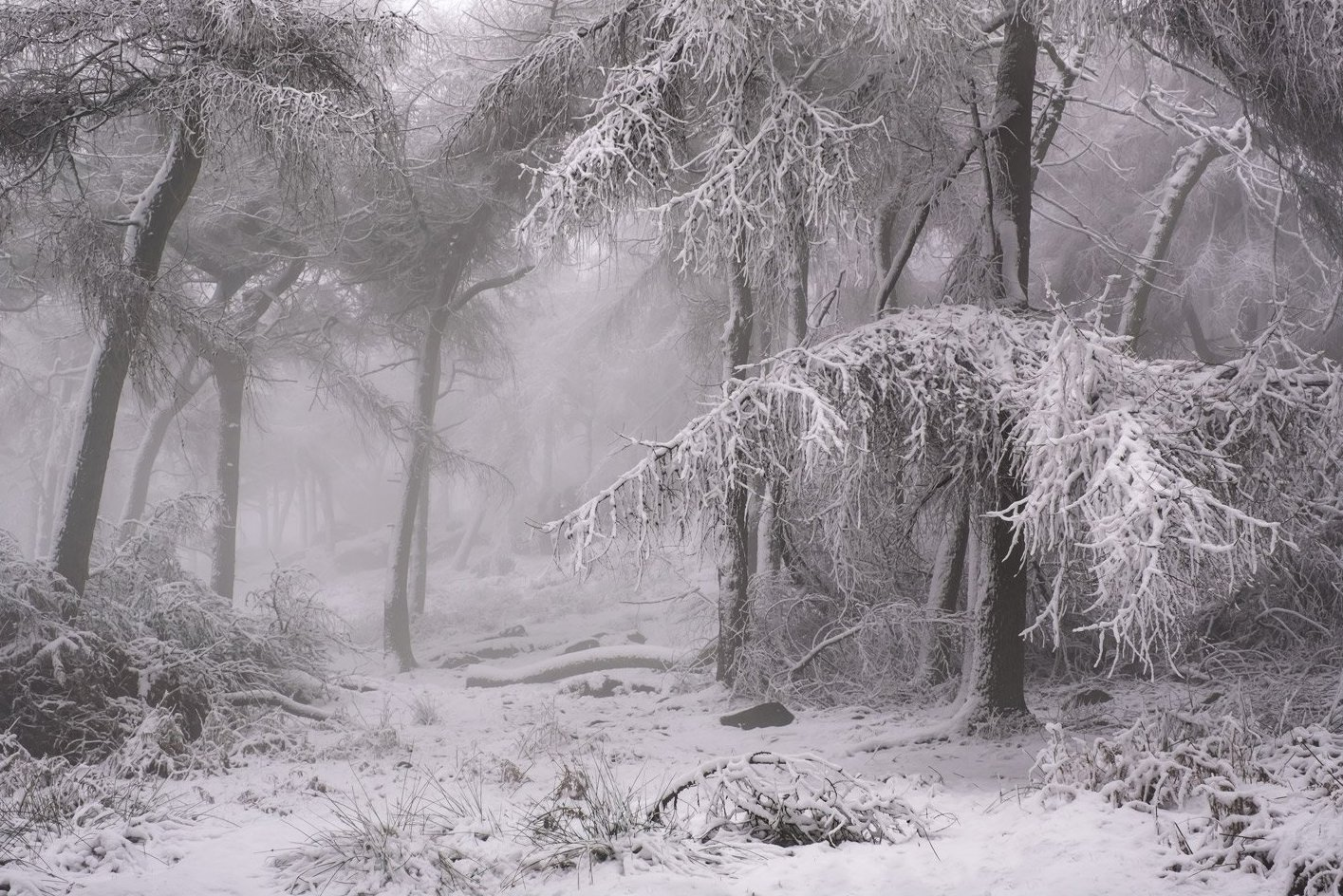 Winter Wonderland - Dave Fieldhouse