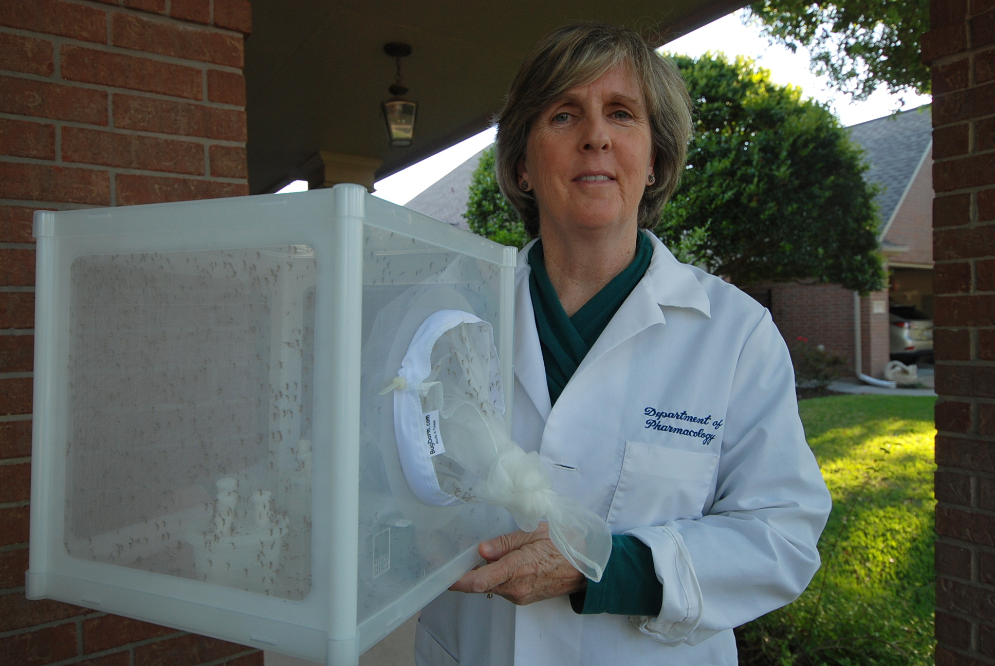 Dr. Laura Plunkett, Ph.D., DABT & Our Mosquitos