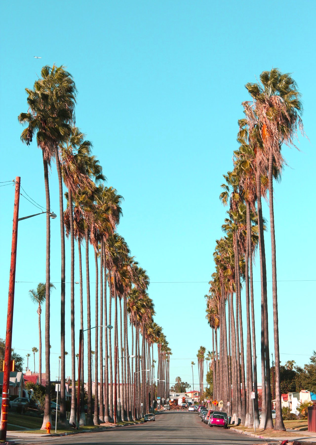 "Someone driving by stopped their car to say, ""Don't you just love the palm trees."""