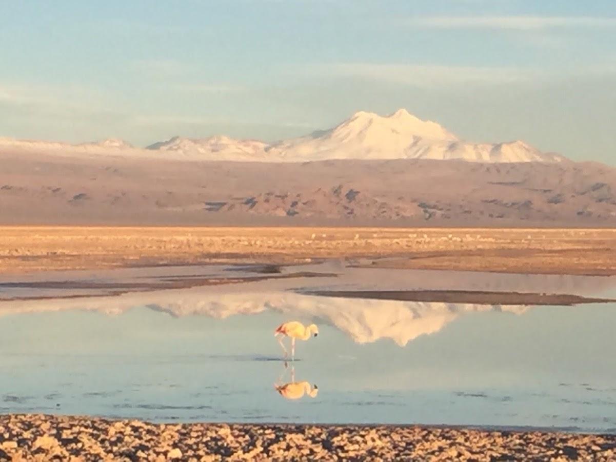 ATACAMA DESERT - Chaxa Lagoon