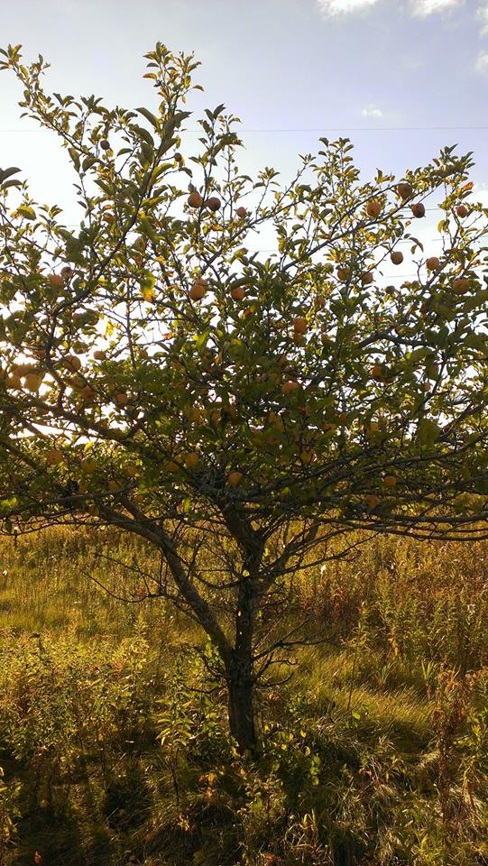 Produce colunteers picked apples at the Mequon Nature Preserve