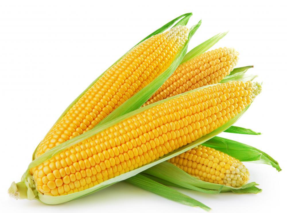 240 lbs of corn