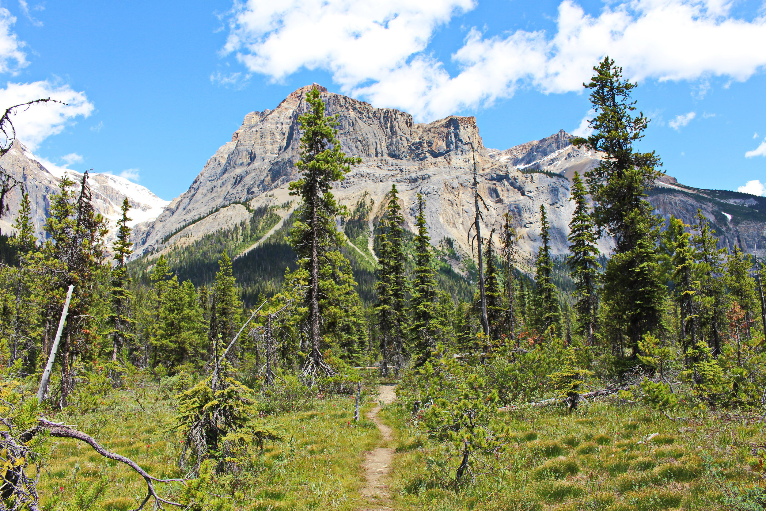Treed Paths and Mountain tops. Love.