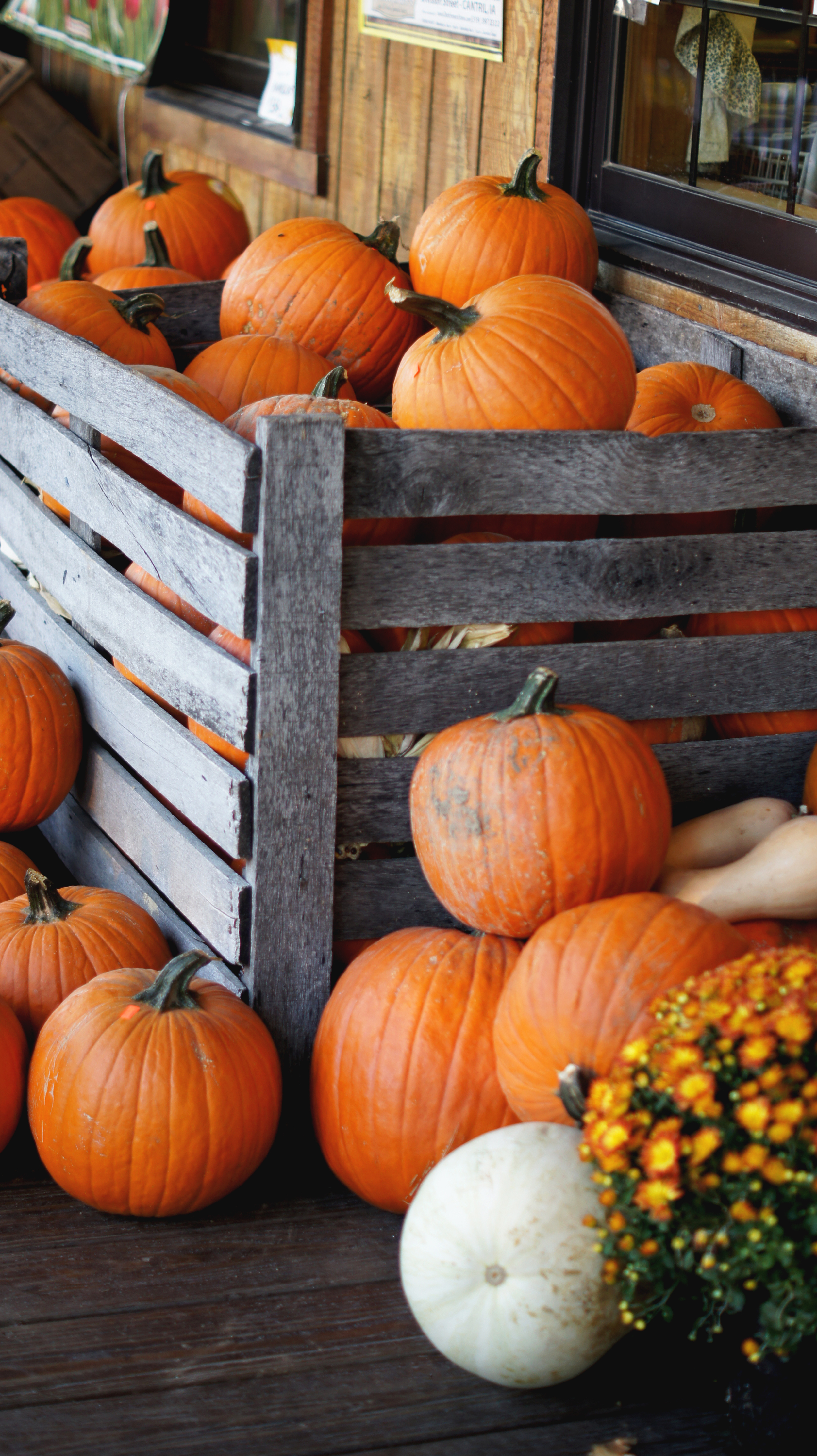 Acanthus House | Pumpkins for Sale in Cantril Iowa