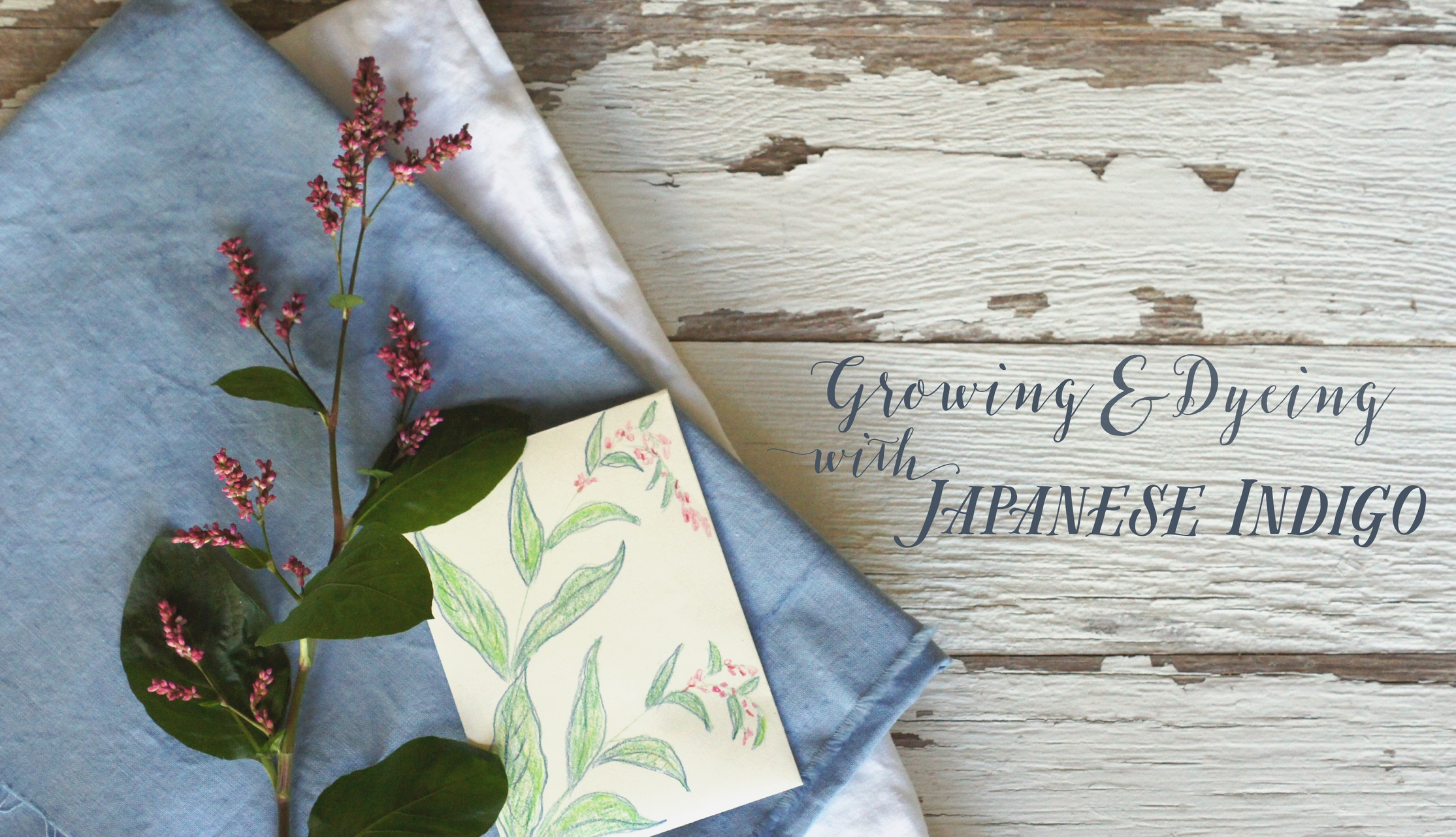 Acanthus House | Growing and Dyeing with Japanese Indigo