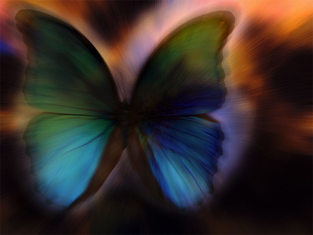 mystic-butterfly-1-insect