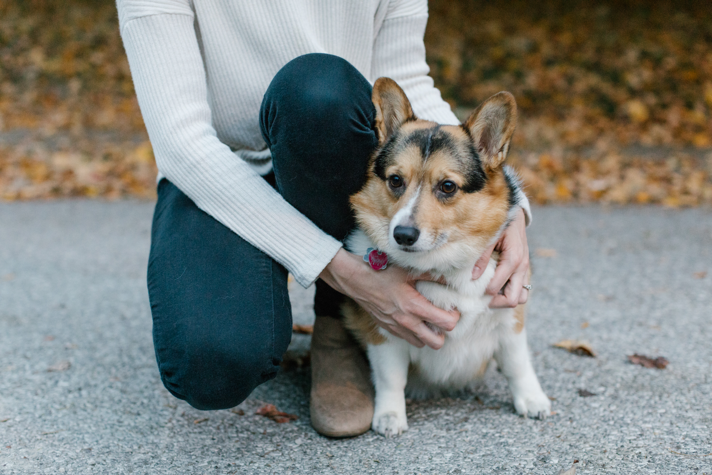A photo of a couple's dog during their engagement session before their wedding in Bloomington, Indiana.