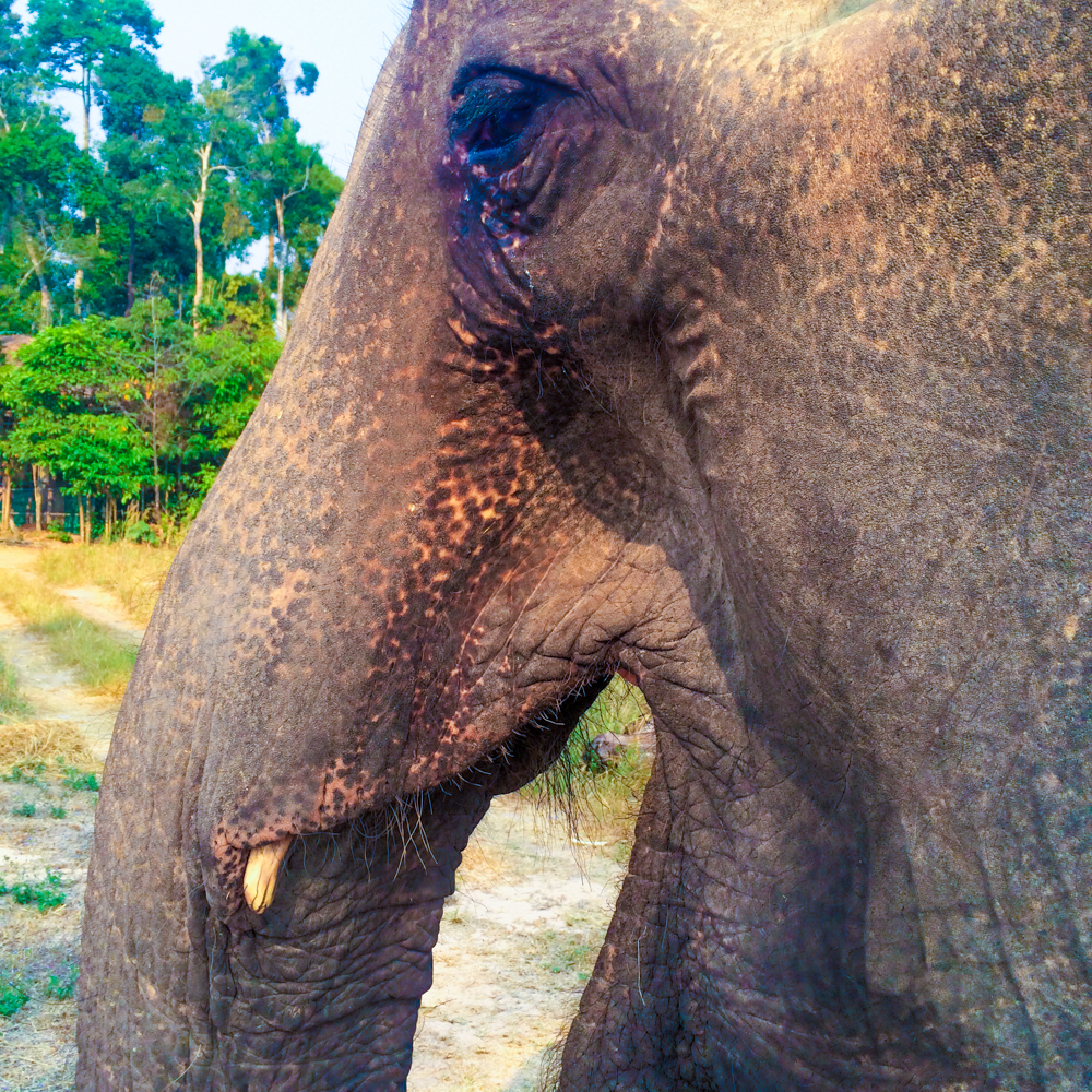 Kham Lin at Elephant Nature Park in Cambodia.