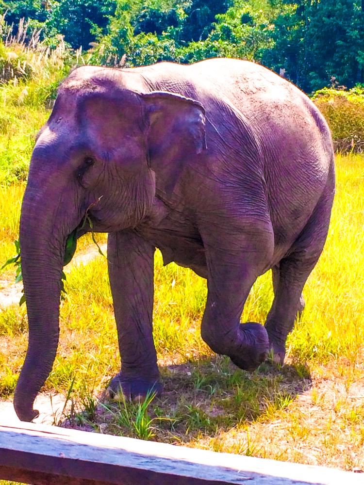 Arun Rai eating and walking.