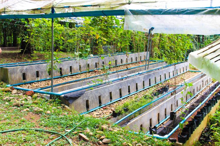 Hydroponic Gardens at Eco-Logic Yoga Retreat.