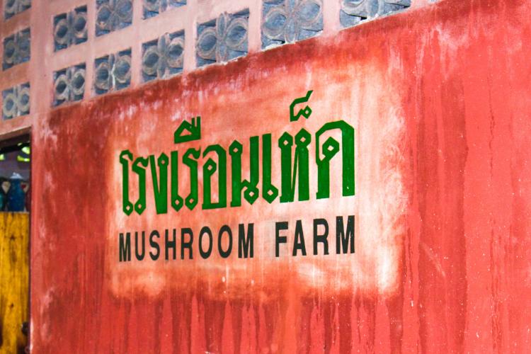 The outside of the mushroom farm at Eco-Logic Yoga Retreat.
