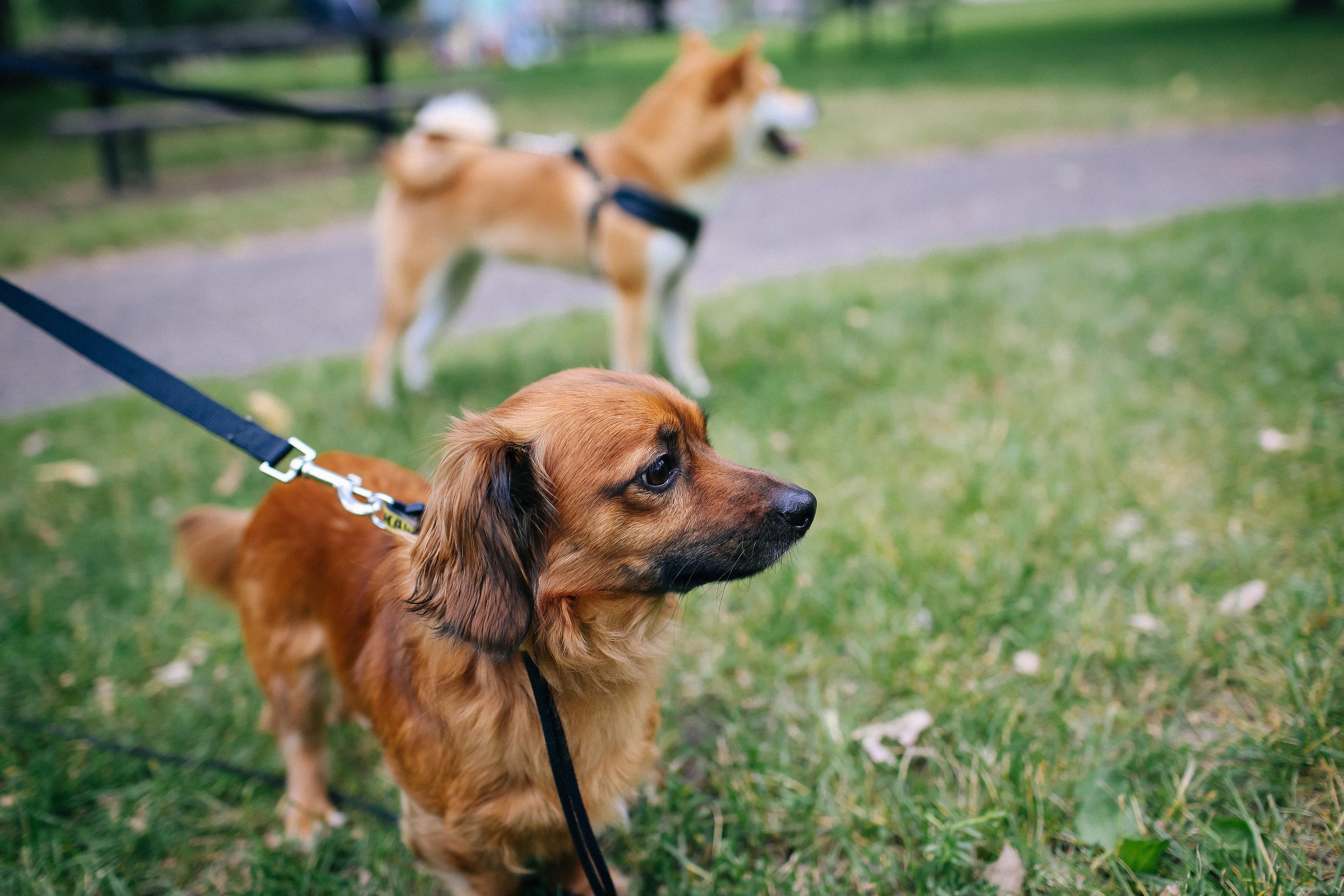 Mpls Dog Portrait