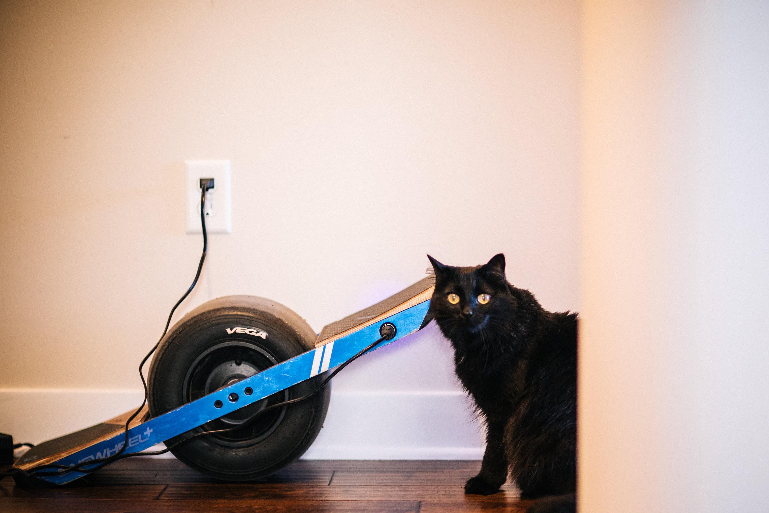 One Wheel Cat