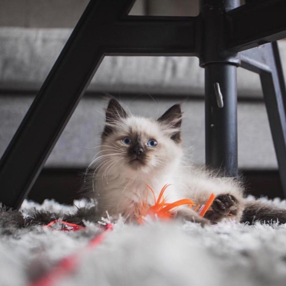Hemingway Gmitro  Cat
