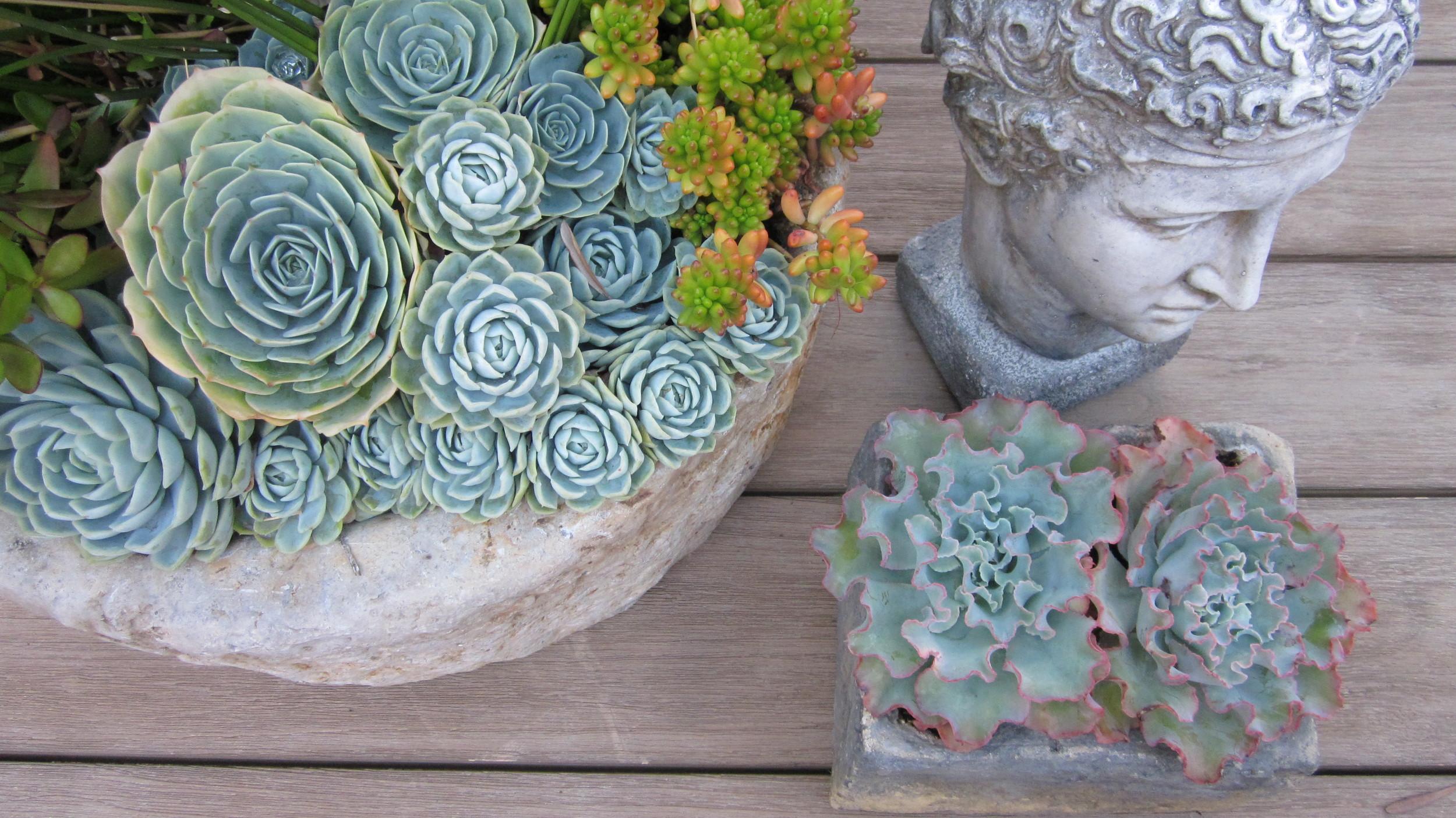 succulent display 2011.jpg
